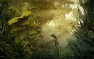 Бесплатные фото природа,зелень,деревья,рисованная