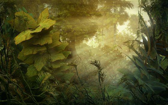Фото бесплатно природа, зелень, деревья