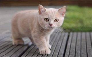 Фото бесплатно котенок рыжий, гладкошерстный, смотрит
