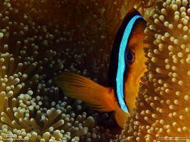 Фото бесплатно рыбка, океан, водоросли