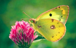 Бесплатные фото бабочка,крылья,лапы,глаза,хобот,цветок,насекомые