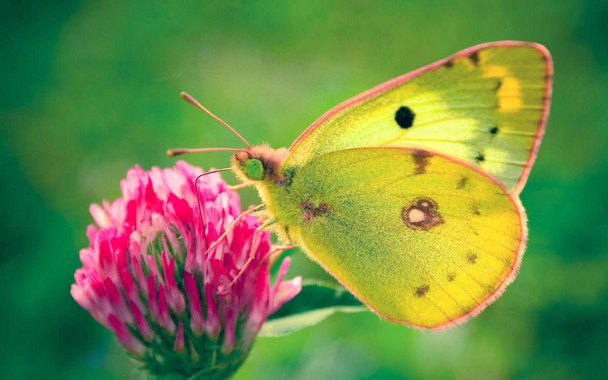 Фото бесплатно бабочка, крылья, лапы, глаза, хобот, цветок, насекомые, насекомые