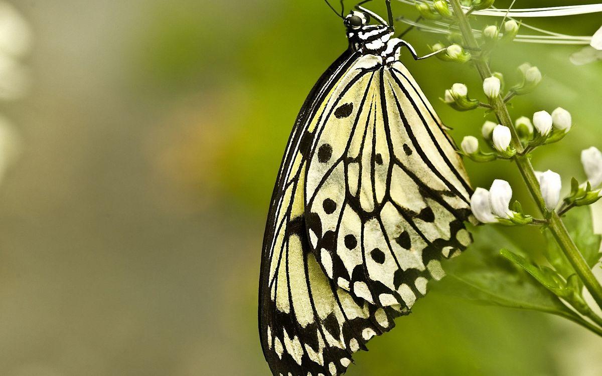 Картинка бабочка, крылья, лапки, глаза, трава, цветок, лепестки, фон, зеленый, насекомые на рабочий стол. Скачать фото обои насекомые