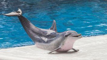 Бесплатные фото дельфин,хвост,вода,голубая,бассейн,плавник,животные