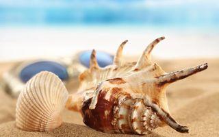 Заставки ракушки, морские, песок