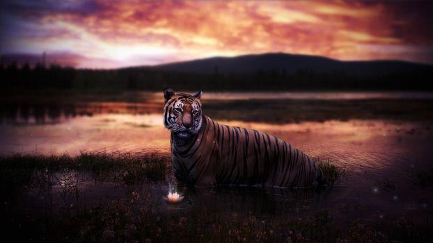 Заставки рендеринг, тигр, болото