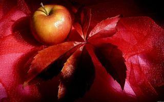Photo free fruit, apple, leaf