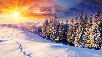 Бесплатные фото горы,снег,свет,солнце,елки,природа,разное