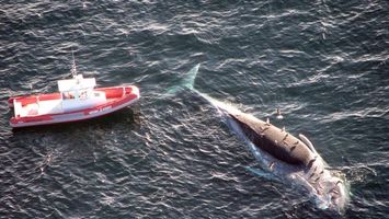 Фото бесплатно кит, умер, погиб