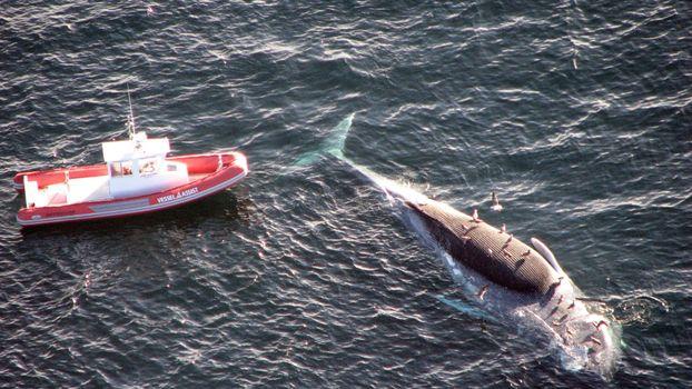 Бесплатные фото кит,умер,погиб,чайки,птицы,лодка,исследование,природа,рыбы,ситуации