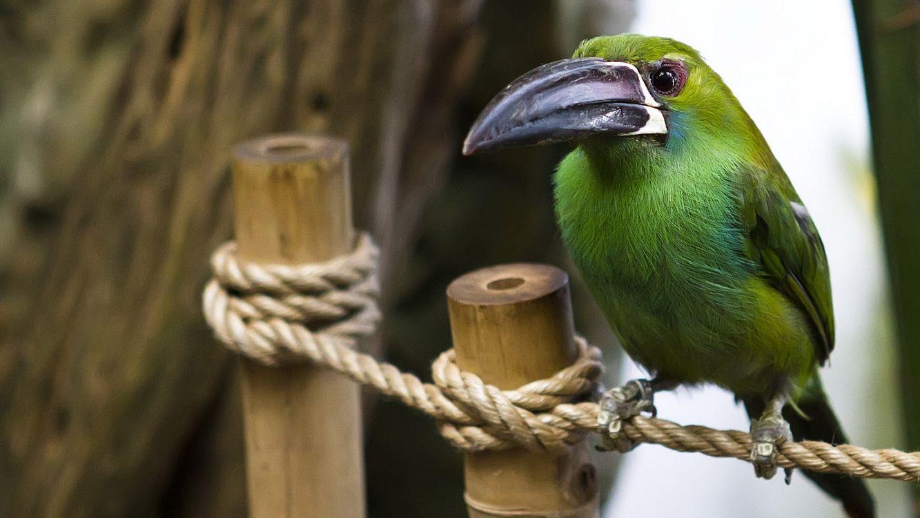 Фото бесплатно клюв, перья, крылья, хвост, глаза, зеленый, веревка, столб, дерево, лапы, когти, птицы, птицы