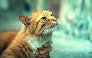 Photo free cat, color, red