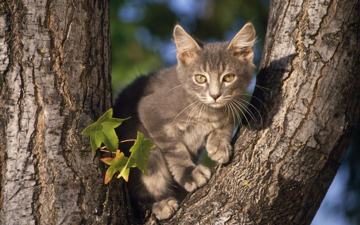 Обои кот, котенок, дерево картинки на телефон