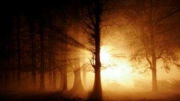 Фото бесплатно лес, деревья, солнце