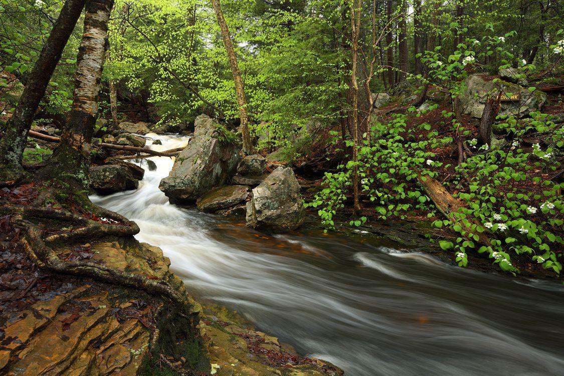 Фото бесплатно лес, река, течение, водопад, деревья, скалы, природа - на рабочий стол