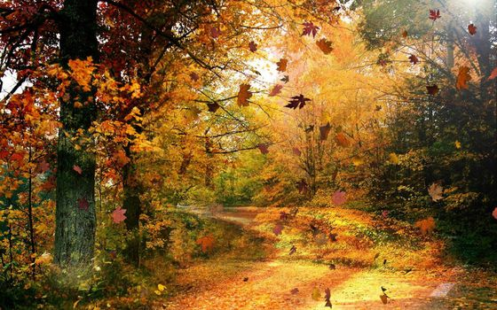 Фото бесплатно осенний день, листопад, лес