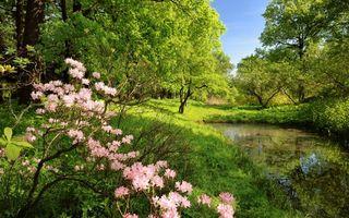 Бесплатные фото озеро,трава,деревья,кустарник,цветы,небо,природа