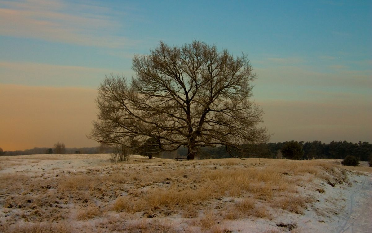 Фото бесплатно поле, трава, снег, лес, деревья, ветки, тропа, природа, природа