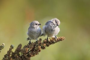 Photo free birds, fluffy, small