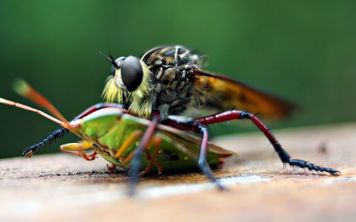 Photos for free dragonfly, herbal, beetle - to the desktop