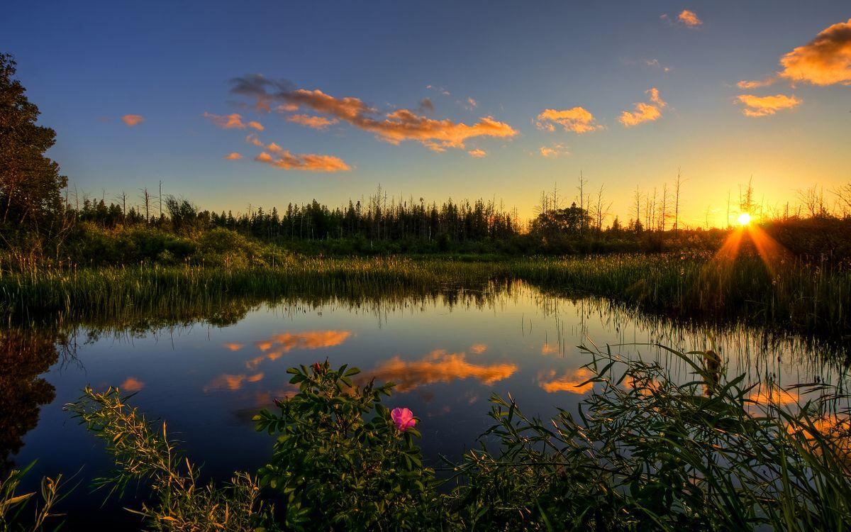 Фото бесплатно трава, болото, пруд, камыши, осока, небо, облака, лето, солнце, лучи, вода, деревья, цветы, пейзажи, природа, природа