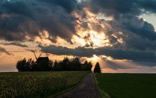 Фото бесплатно вечер, поле, деревья