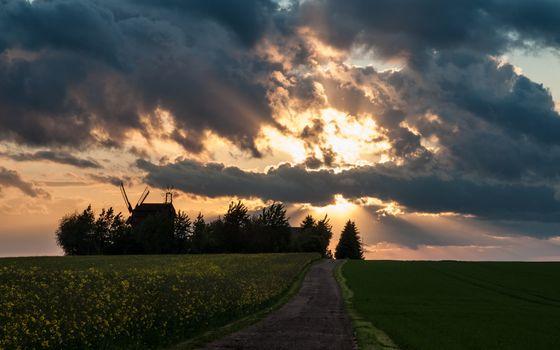 Photo free evening, field, trees