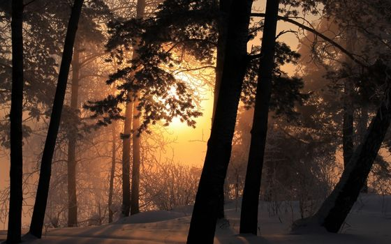 Фото бесплатно лес, зима, туман