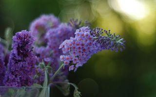 Фото бесплатно букет, цветки, листья