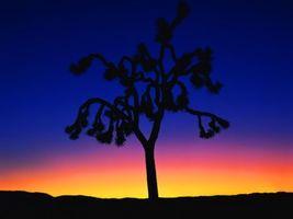 Фото бесплатно дерево, иголки, закат