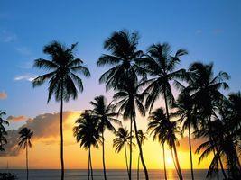 Бесплатные фото деревья,пальмы,песок,море,небо,солнце,природа