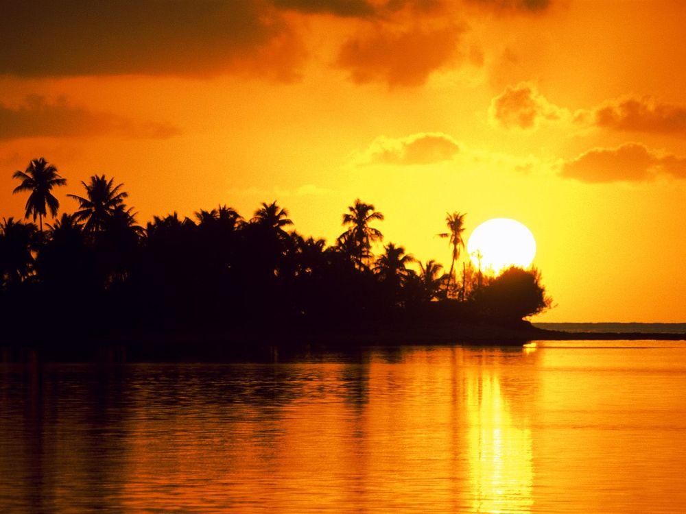 Фото бесплатно деревья, пальмы, вода, небо, луна, облака, природа, природа - скачать на рабочий стол