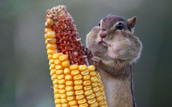 Photo free hamster, rodent, stuffed