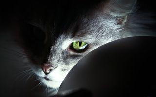 Бесплатные фото кошка,морда,глаза,зеленые,шерсть,свет,темнота