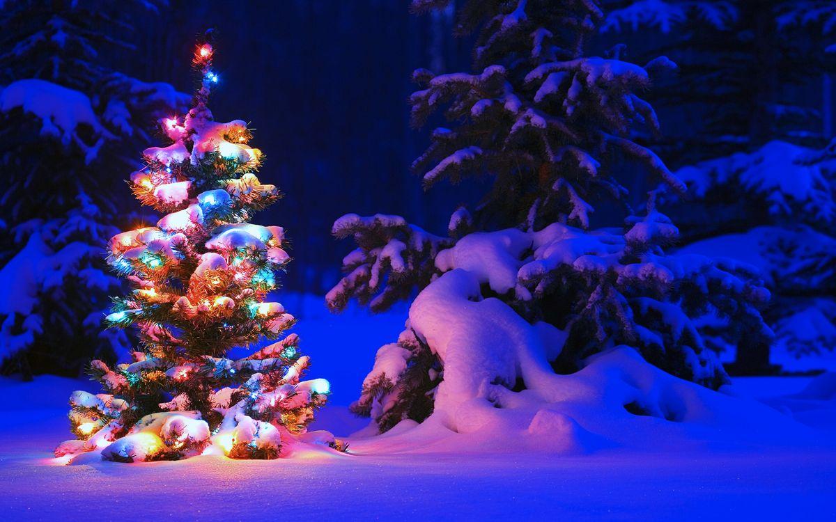 Фото бесплатно лес, вечер, ёлка, праздники, праздники - скачать на рабочий стол