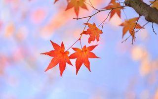 Photo free sun, autumn, sky