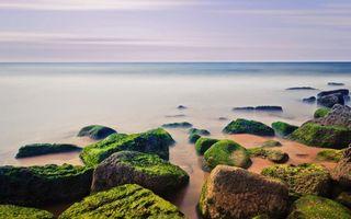 Бесплатные фото море,горизонт,берег,камни,мох,природа