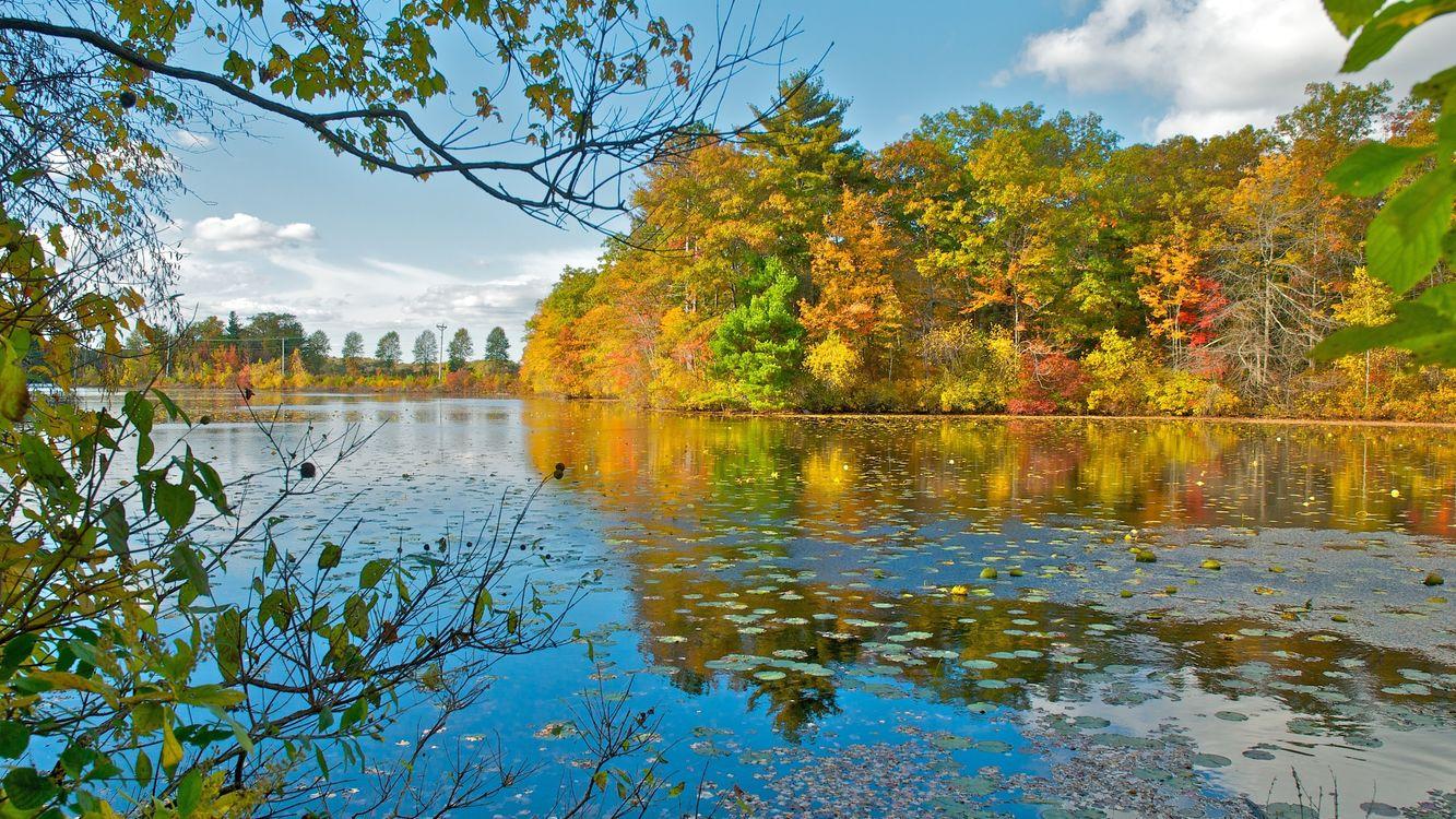 Фото бесплатно деревья, камыш, осень - на рабочий стол
