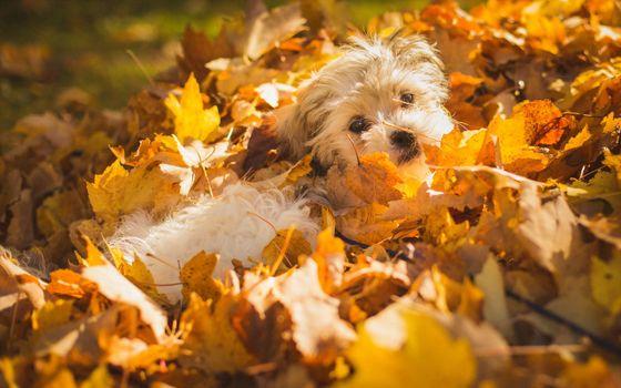 Заставки осенний листопад,собака,листья,солнечный,день,природа,собаки