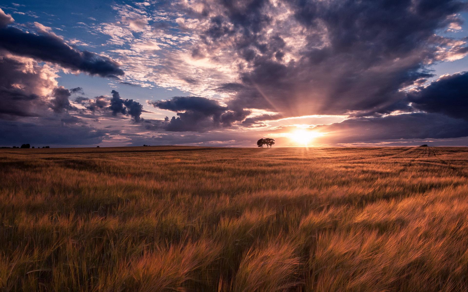 поле, трава, деревья