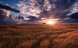Фото бесплатно поле, трава, деревья, горизонт, небо, солнце, закат, облака, природа