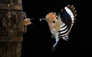 Фото бесплатно птичка, птенчик, птенец