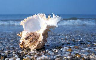Обои ракушка, берег, камни, вода, море, океан, галька, волна, юг, небо, голубое, подводный мир