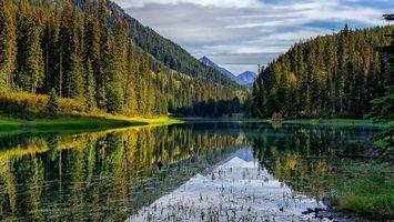 Бесплатные фото река,вода,лес,деревья,трава,зеленая,природа