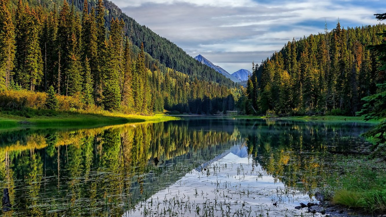 Фото бесплатно река, вода, лес, деревья, трава, зеленая, природа, природа - скачать на рабочий стол