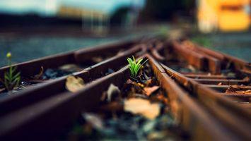 Бесплатные фото рельсы,шпалы,железная,дорога,вокзал,трава,растение