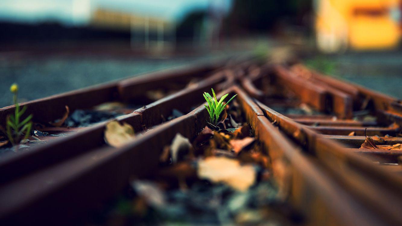 Фото бесплатно рельсы, шпалы, железная, дорога, вокзал, трава, растение, зеленое, весна, росток, солнце, закат, природа, природа