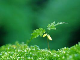 Бесплатные фото трава,зеленая,росток,стебель,листья,растение,природа