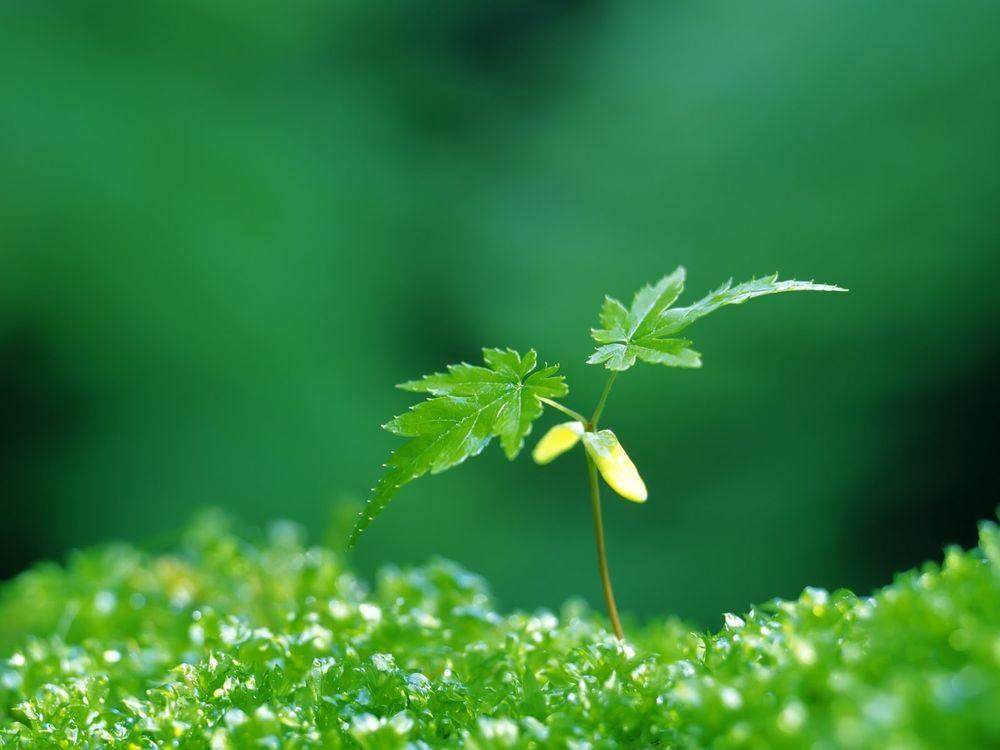 Фото бесплатно трава, зеленая, росток, стебель, листья, растение, природа, природа