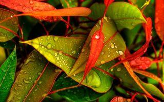 Бесплатные фото трава,растение,листья,красные,оранжевые,зеленые,роса